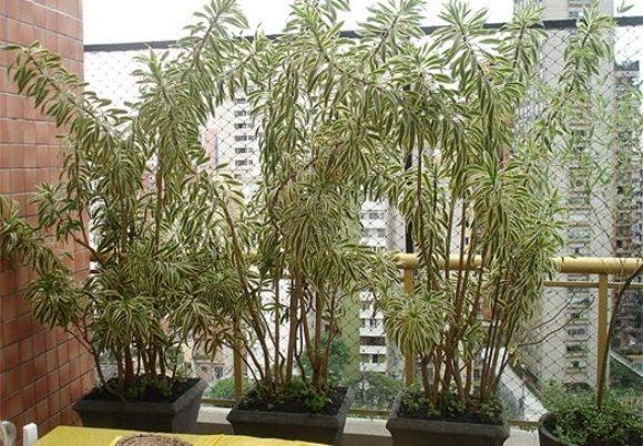 plantas para jardim muito sol:Confira 10 dicas para cuidar do seu jardim durante o inverno – ZAP em