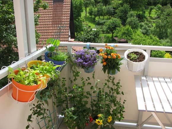 Confira dicas para fazer um jardim perfumado - ZAP em Casa