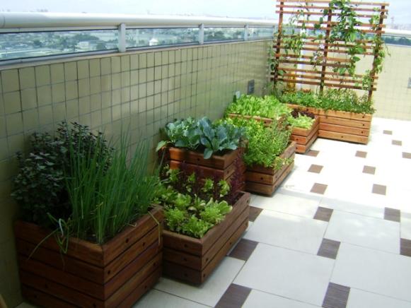 mini jardim de temperos : mini jardim de temperos: na fase de semente e uma vez ao dia para a muda ou planta já crescida