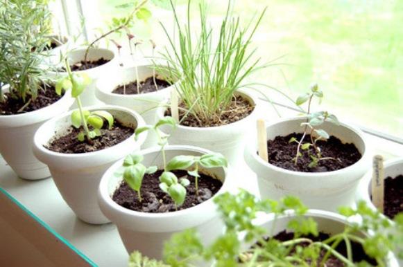 Horta Em Apartamento Saiba Como Cultivar