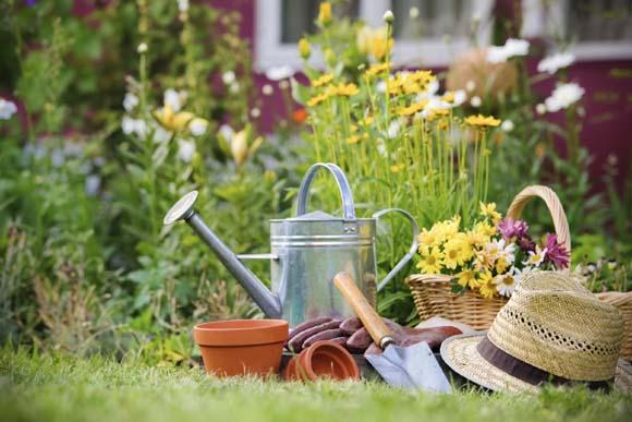 Período é ótimo para realizar a limpeza e adubação no jardim