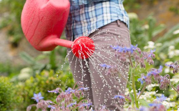 Dê preferência ao regador na hora de molhar suas plantas (Fotos: ThinkStock)