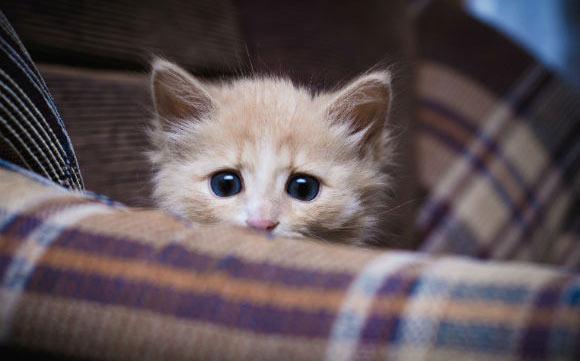 Gatos costumam apresentar imobilidade ou isolamento em momentos de estresse (Fotos: Shutterstock)