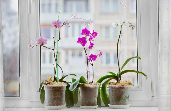 hotel para orquídeas