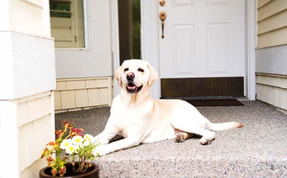 Todo pet merece uma casinha alegre e diferenciada (Foto: Shutterstock)