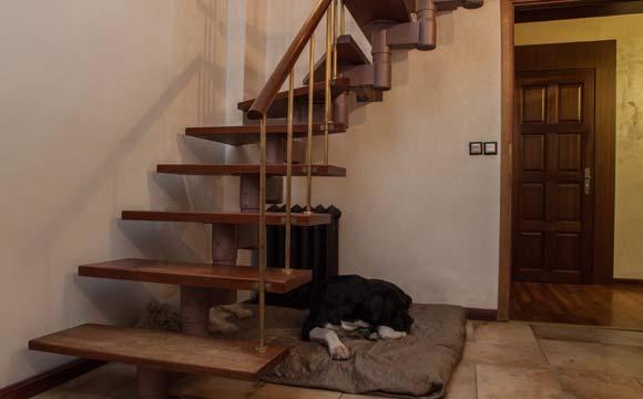 Escadas podem se tornar o lar de um cão ou gato (Foto: Shutterstock)