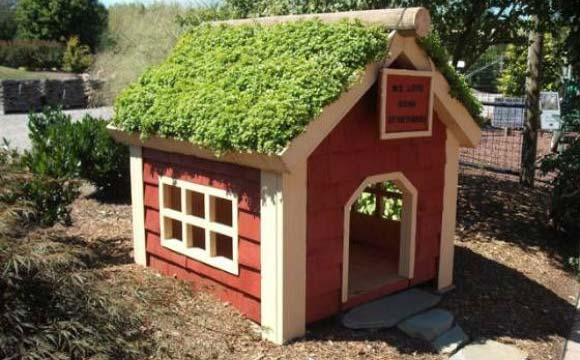 Para quem tem quintal, uma opção é a casinha com telhado verde, bom também para o meio ambiente (Foto: Pinterest)