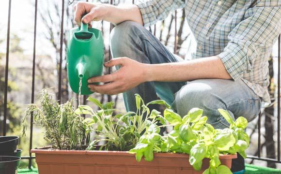Água de chuva pode ser utilizada para regar plantas, lavar calçada, quintal e até em vaso sanitário (Foto: Shutterstock)