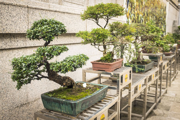 hotel para bonsais