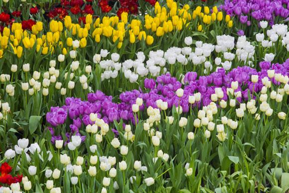 flores p um jardim ao solJardim – Como Fazer um Jardim em casa