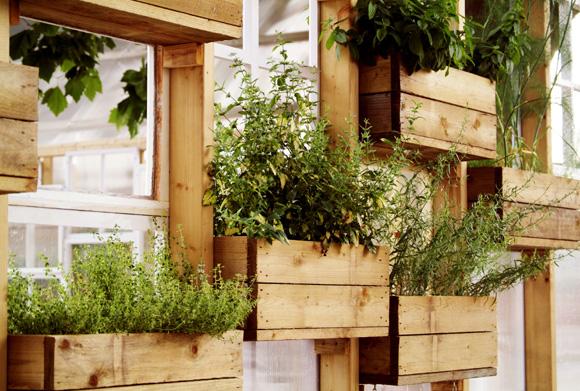 mini jardim apartamento:Mini horta suspensa em caixotes de madeira (Foto: Shutterstock)