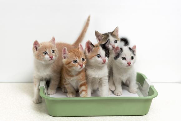 Adeus à caixinha de areia: engenhoca promete ensinar gatos a usar vaso sanitário (Foto Shutterstock)