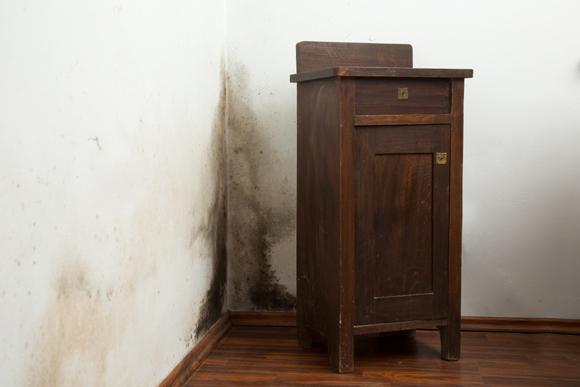 Bolor se instala geralmente em paredes com móveis encostados (Foto: Shutterstock)