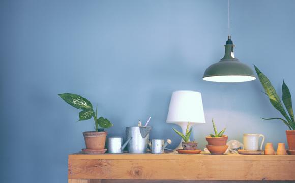 Plantinhas podem ser colocadas em cima de um móvel (Foto: Shutterstock)