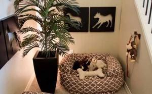 espaco para cachorros