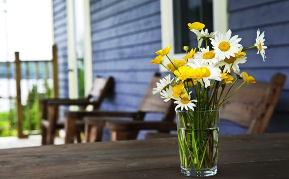 Margarida necessita de bastante sol (Foto: Shutterstock)