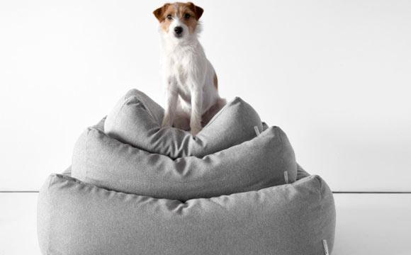 Pets com pelos curtos precisam de atenção especial no inverno (Foto: Reprodução/Shutterstock)