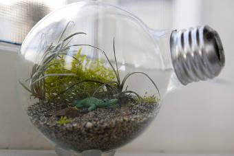 terrário lâmpada